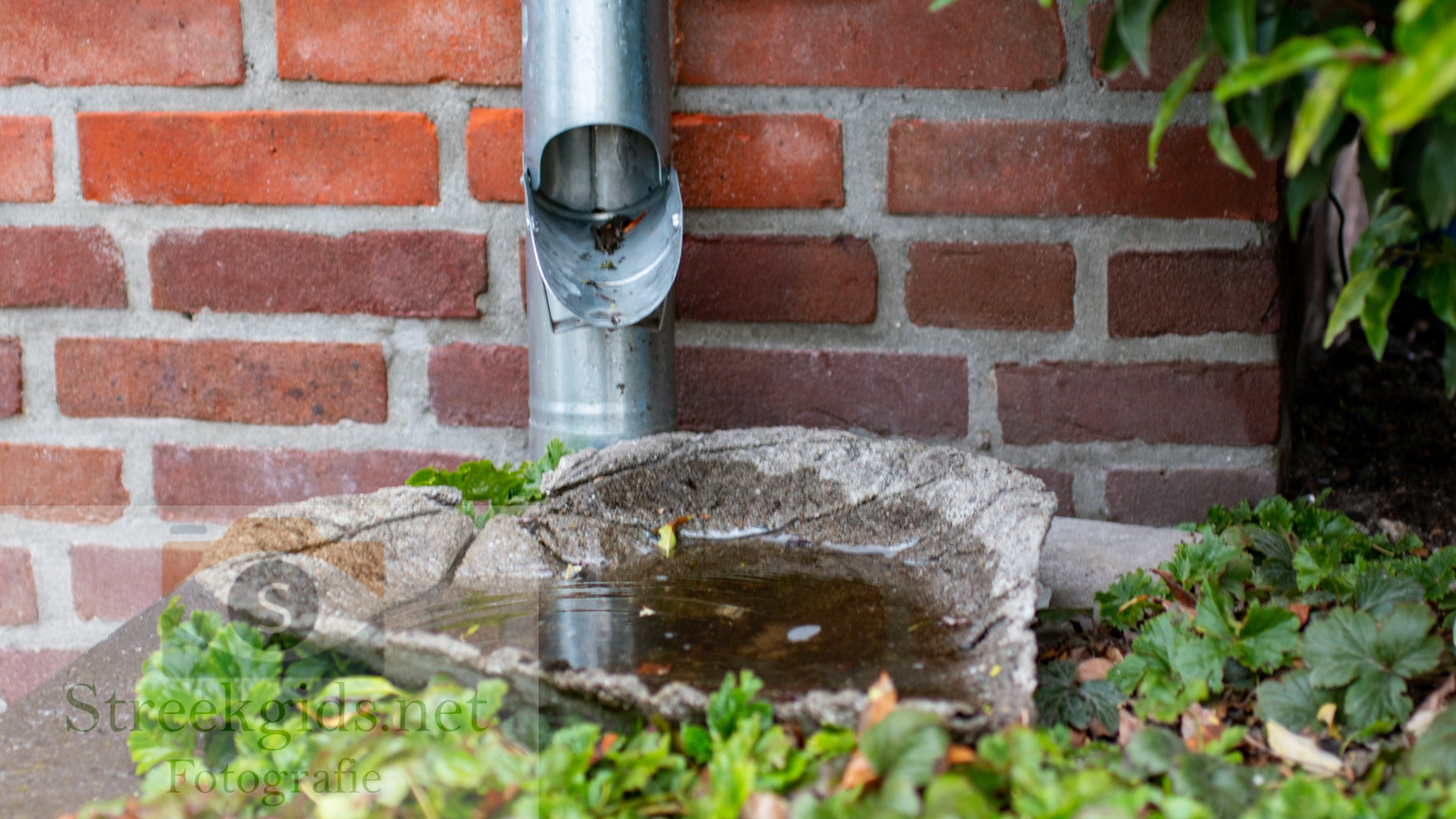 Hemelwater-afvoerklep