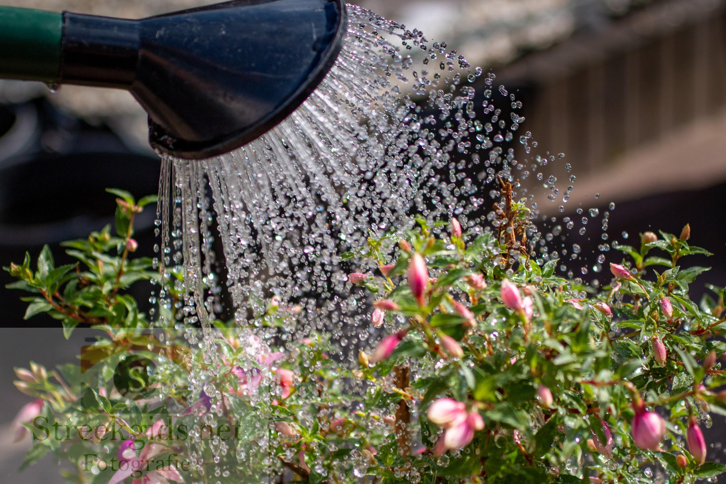 Bloemen regenwater geven